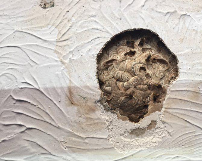 Pest control Cwmbran